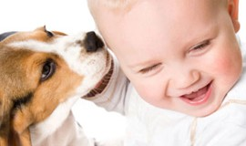 5 ting du bør overveje inden du køber kæledyr til børn