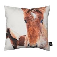 puder-med-print-pony